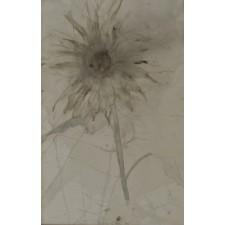 von elbe, flor