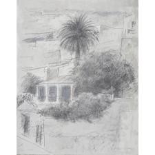 joaquin saenz, palmera, litografia